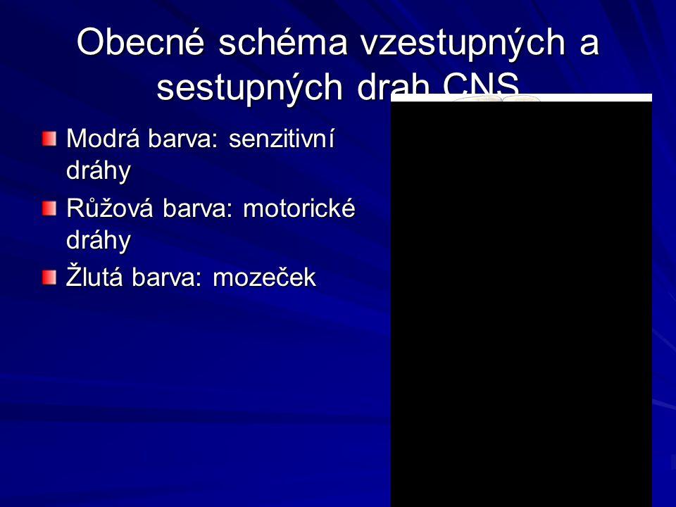 Obecné schéma vzestupných a sestupných drah CNS Modrá barva: senzitivní dráhy Růžová barva: motorické dráhy Žlutá barva: mozeček