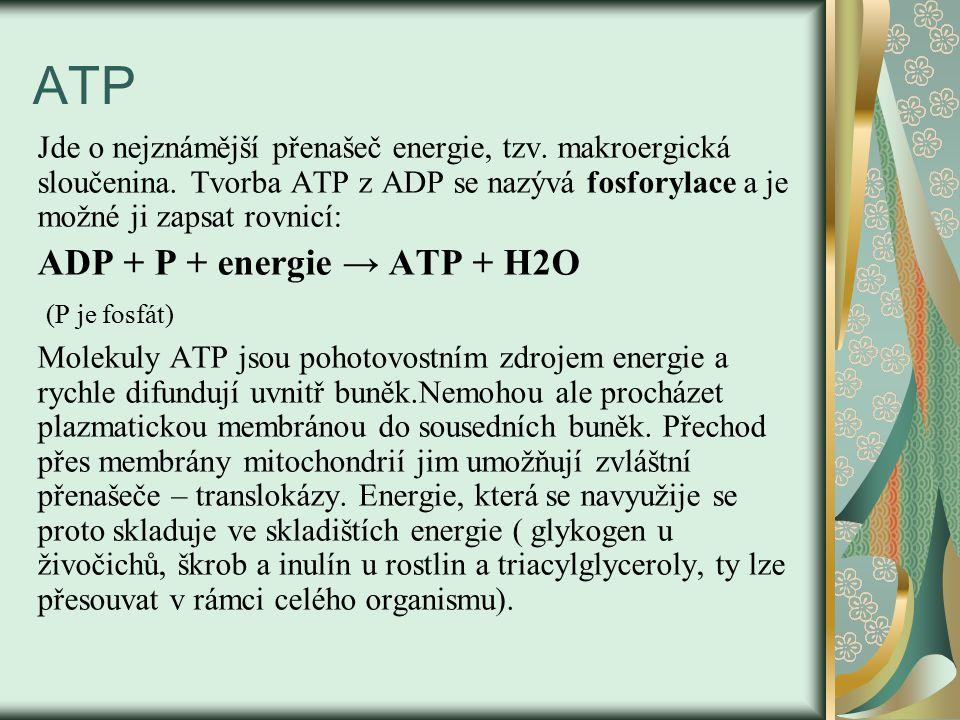 ATP Jde o nejznámější přenašeč energie, tzv. makroergická sloučenina. Tvorba ATP z ADP se nazývá fosforylace a je možné ji zapsat rovnicí: ADP + P + e