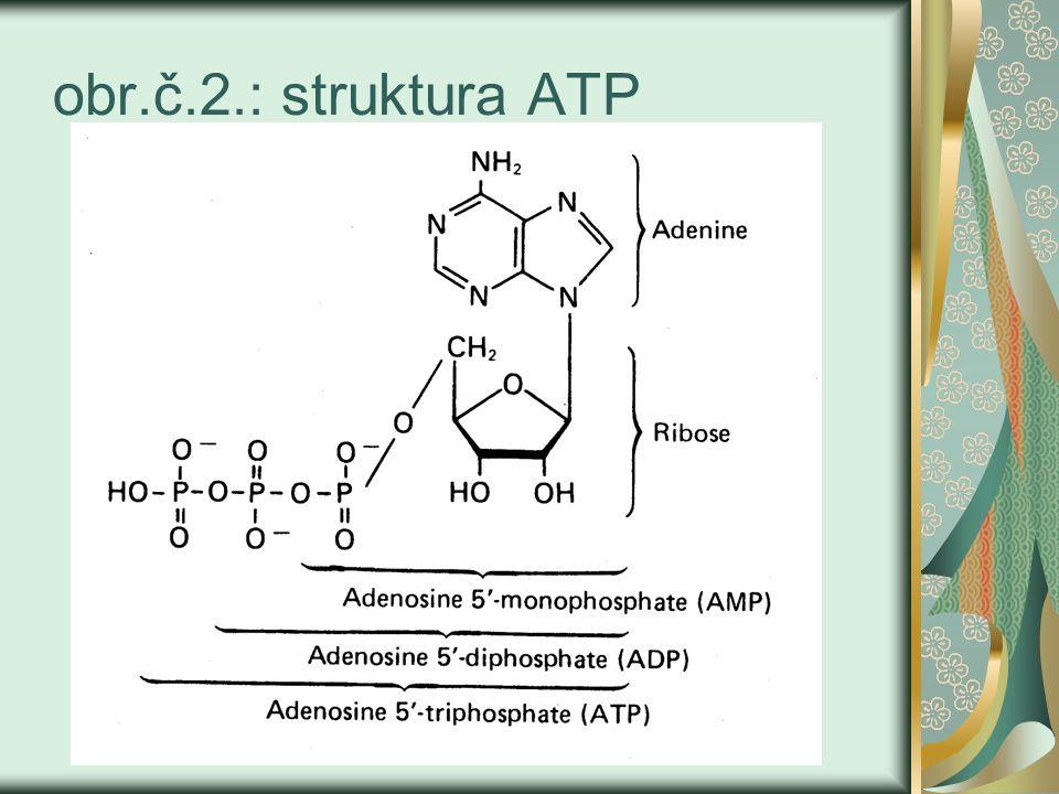 obr.č.2.: struktura ATP