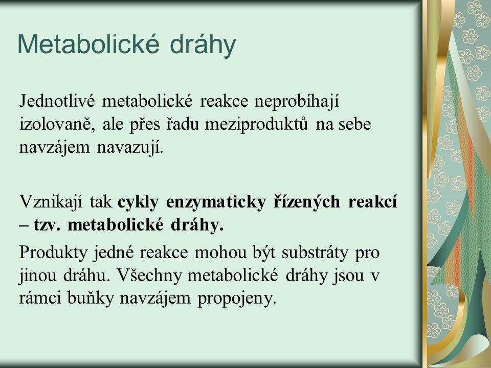 Metabolické dráhy Jednotlivé metabolické reakce neprobíhají izolovaně, ale přes řadu meziproduktů na sebe navzájem navazují.