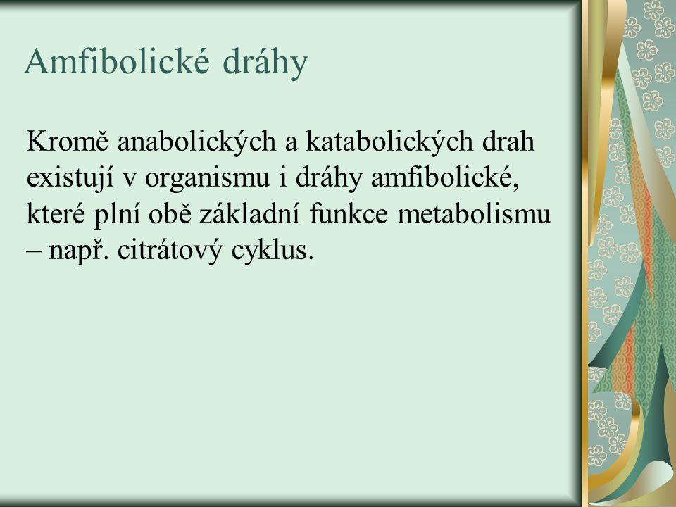 Amfibolické dráhy Kromě anabolických a katabolických drah existují v organismu i dráhy amfibolické, které plní obě základní funkce metabolismu – např.