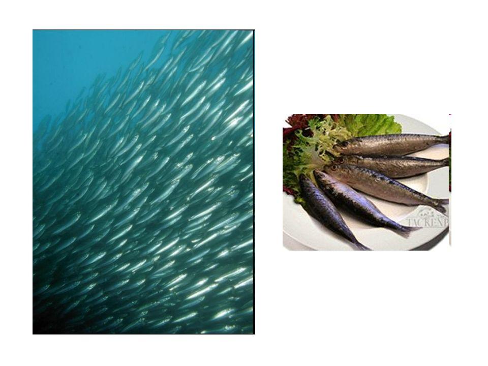 Plankton – drobné organismy unášené při hladině vodních nádrží.