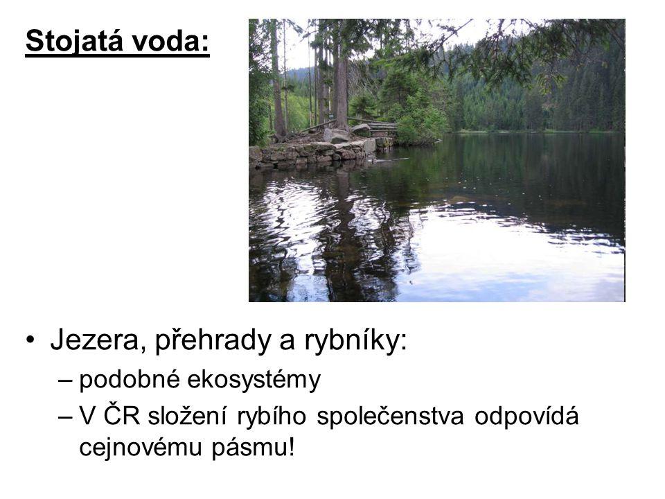 Stojatá voda: Jezera, přehrady a rybníky: –podobné ekosystémy –V ČR složení rybího společenstva odpovídá cejnovému pásmu!