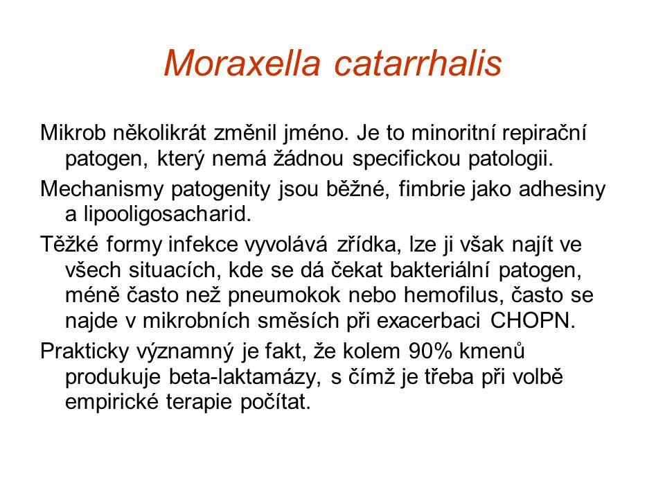 Moraxella catarrhalis Mikrob několikrát změnil jméno. Je to minoritní repirační patogen, který nemá žádnou specifickou patologii. Mechanismy patogenit