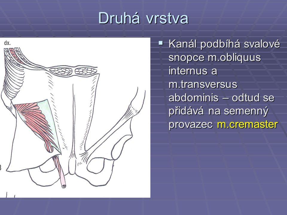 Druhá vrstva  Kanál podbíhá svalové snopce m.obliquus internus a m.transversus abdominis – odtud se přidává na semenný provazec m.cremaster