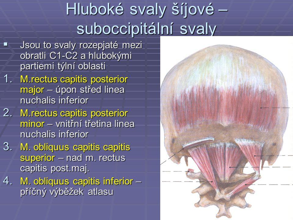 Hluboké svaly šíjové – suboccipitální svaly  Jsou to svaly rozepjaté mezi obratli C1-C2 a hlubokými partiemi týlní oblasti 1. M.rectus capitis poster