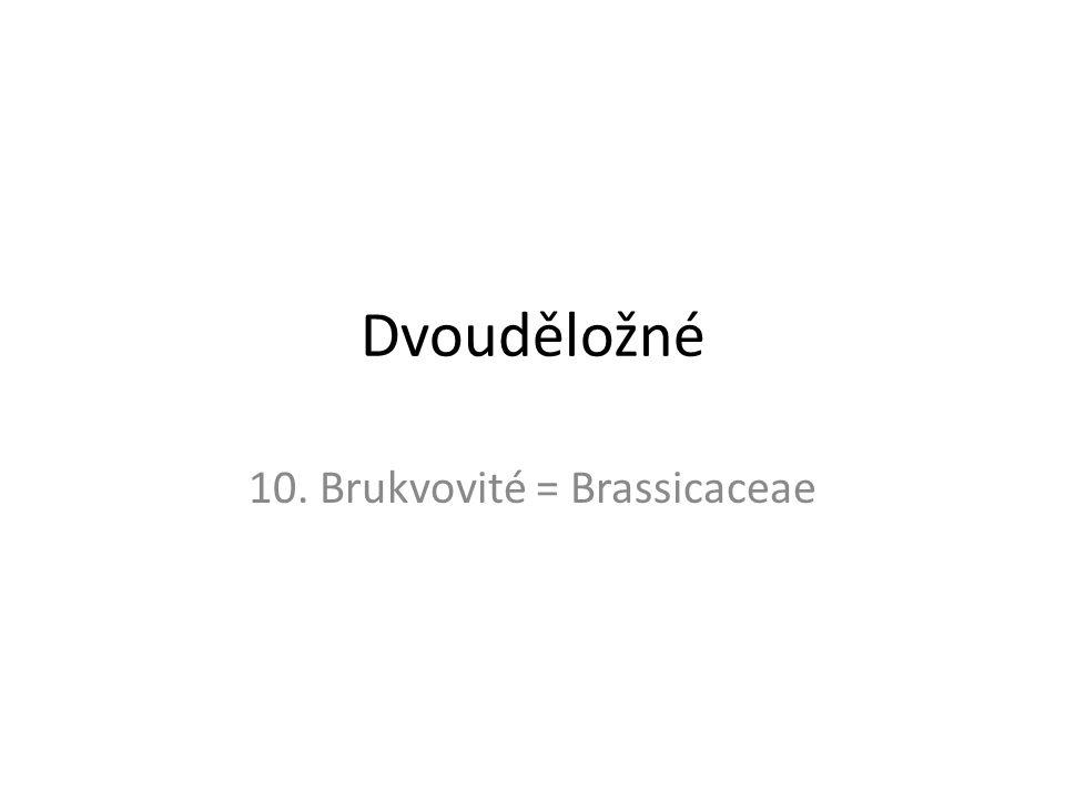 Dvouděložné 10. Brukvovité = Brassicaceae