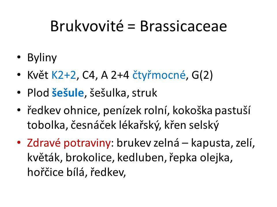 Brukvovité = Brassicaceae Byliny Květ K2+2, C4, A 2+4 čtyřmocné, G(2) Plod šešule, šešulka, struk ředkev ohnice, penízek rolní, kokoška pastuší tobolka, česnáček lékařský, křen selský Zdravé potraviny: brukev zelná – kapusta, zelí, květák, brokolice, kedluben, řepka olejka, hořčice bílá, ředkev,