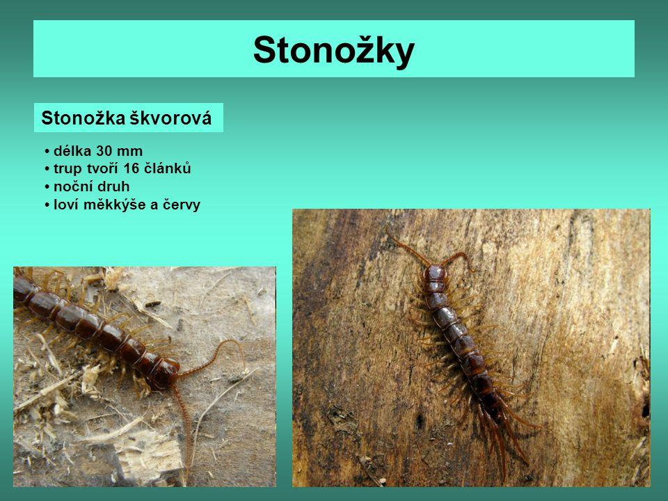 Stonožky Stonožka škvorová délka 30 mm trup tvoří 16 článků noční druh loví měkkýše a červy