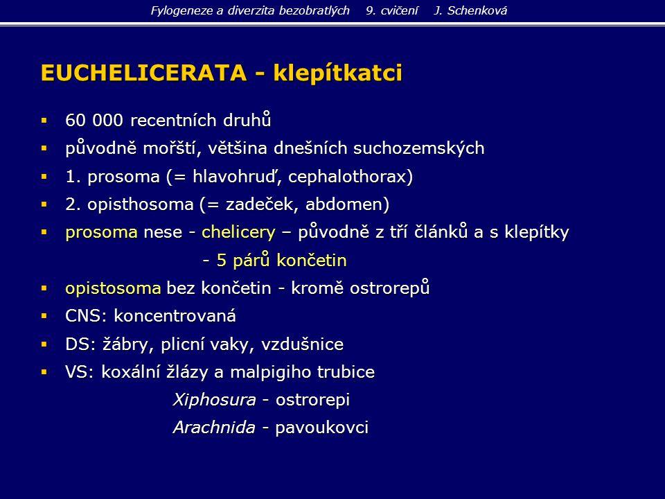 EUCHELICERATA - klepítkatci  60 000 recentních druhů  původně mořští, většina dnešních suchozemských  1. prosoma (= hlavohruď, cephalothorax)  2.
