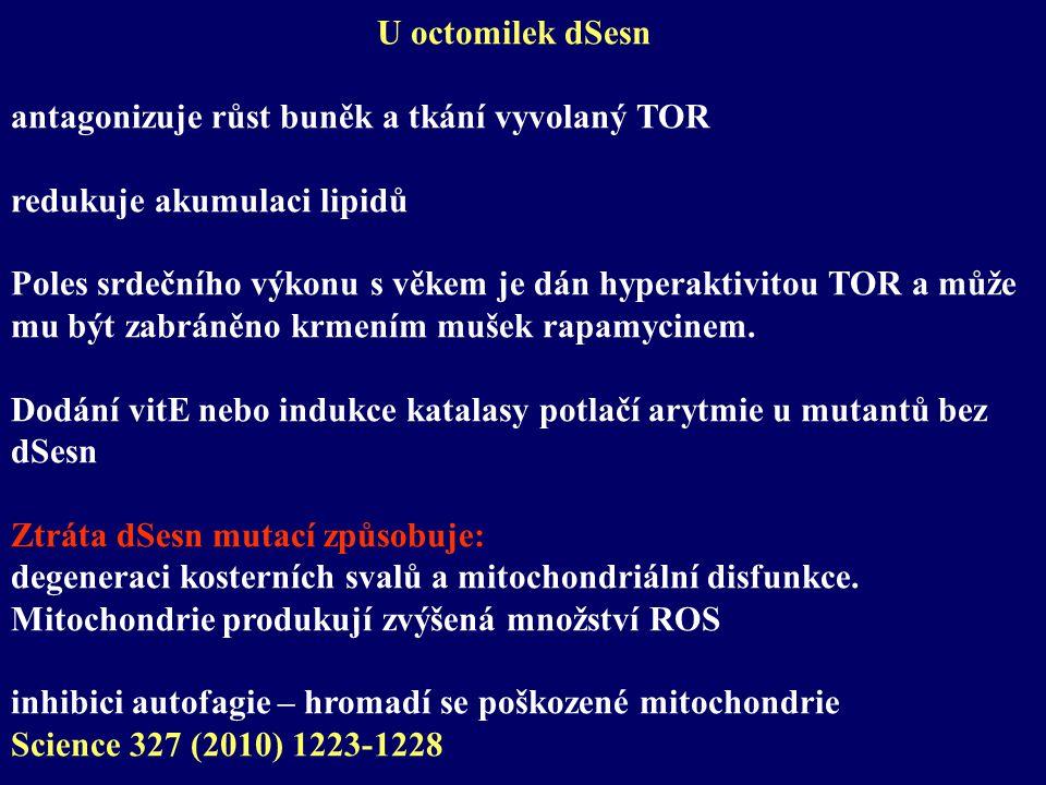 U octomilek dSesn antagonizuje růst buněk a tkání vyvolaný TOR redukuje akumulaci lipidů Poles srdečního výkonu s věkem je dán hyperaktivitou TOR a může mu být zabráněno krmením mušek rapamycinem.