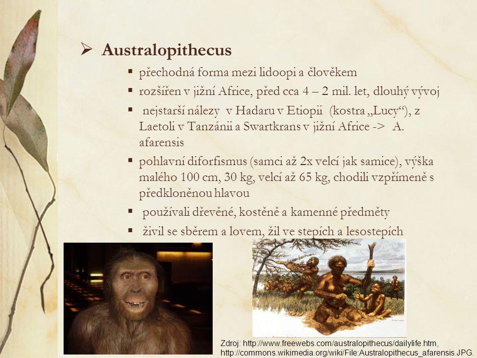  Amphipithecus, Pondaungia (eocénní vrstvy v Barmě, stáří až 44 mil. let)  Aegyptopithecus, Propliopithecus – dolní čelist podobná čelisti gibbona (