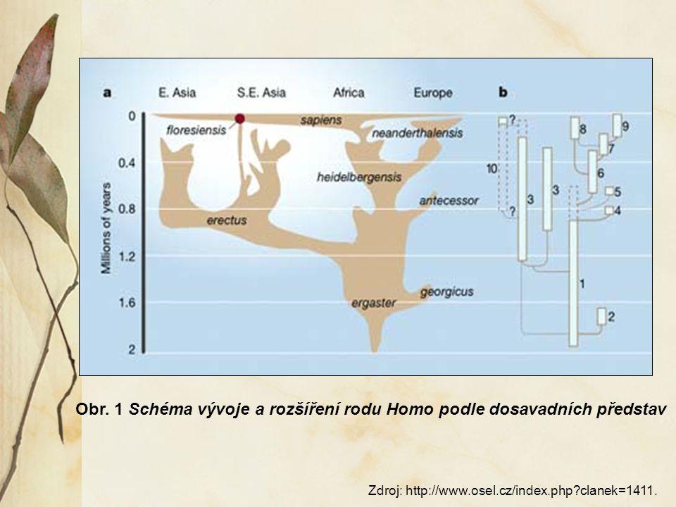 Odlišné znaky od Australopitéka:  cílevědomá výroba a užívání nástrojů  větší mozek – rozdíl minimálně 500 cm3  menší zuby a čelist a parabolitic