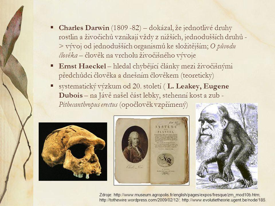  Charles Darwin (1809 -82) – dokázal, že jednotlivé druhy rostlin a živočichů vznikají vždy z nižších, jednodušších druhů - > vývoj od jednodušších organismů ke složitějším; O původu člověka – člověk na vrcholu živočišného vývoje  Ernst Haeckel – hledal chybějící články mezi živočišnými předchůdci člověka a dnešním člověkem (teoreticky)  systematický výzkum od 20.