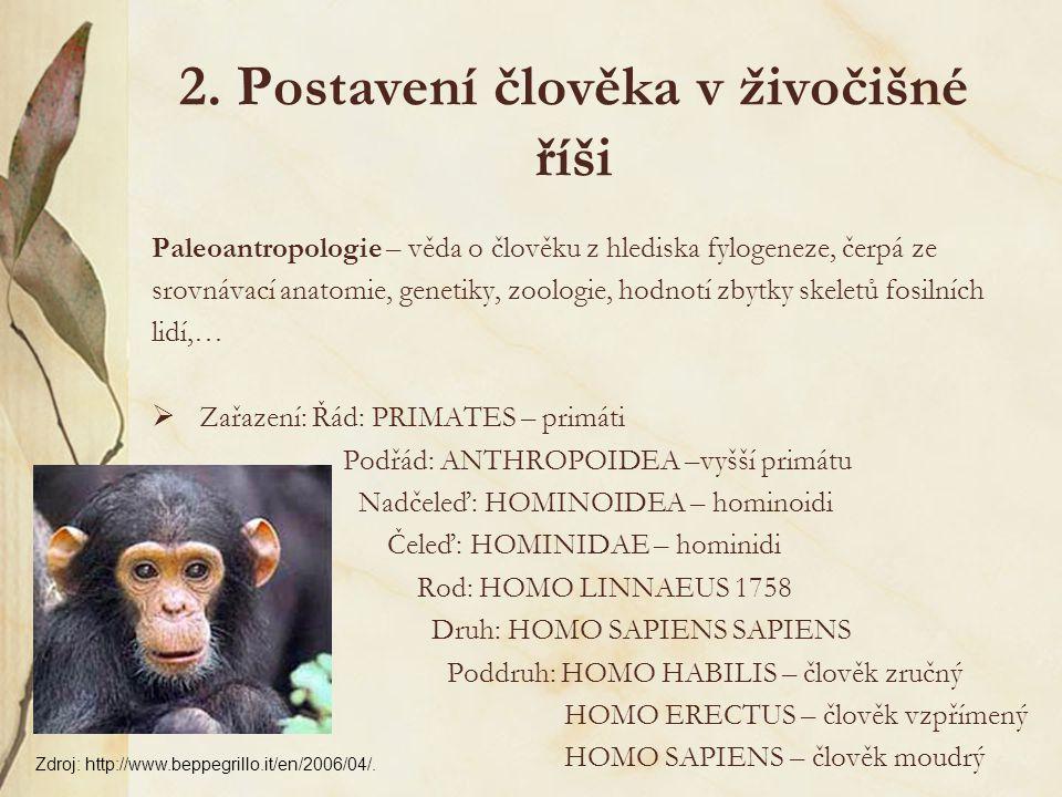 Homo erectus  člověk vzpřímený  stáří 1,6 mil.