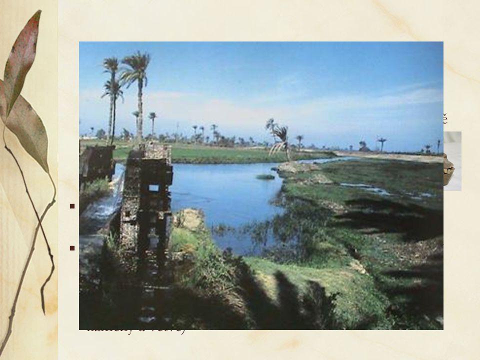  Amphipithecus, Pondaungia (eocénní vrstvy v Barmě, stáří až 44 mil.