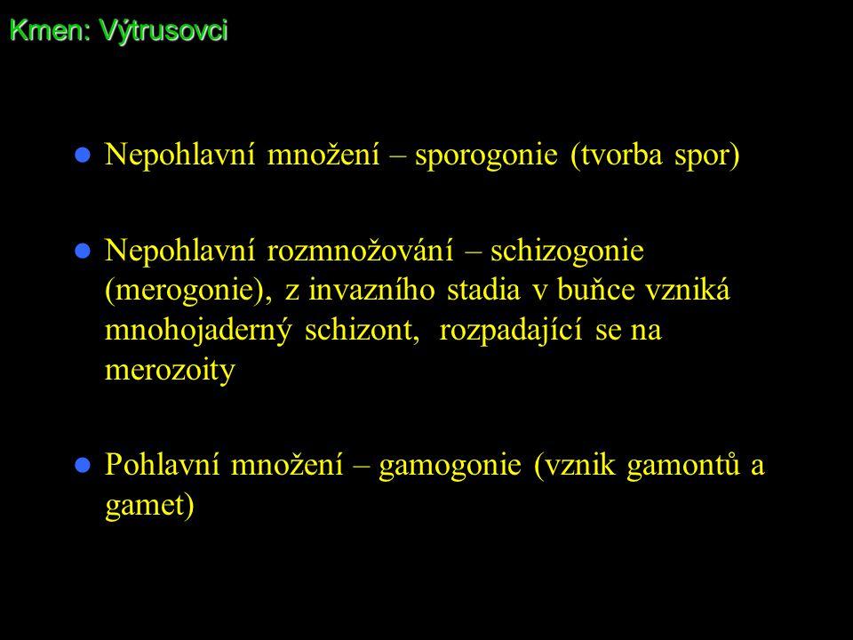 Kmen: Výtrusovci Nepohlavní množení – sporogonie (tvorba spor) Nepohlavní rozmnožování – schizogonie (merogonie), z invazního stadia v buňce vzniká mn