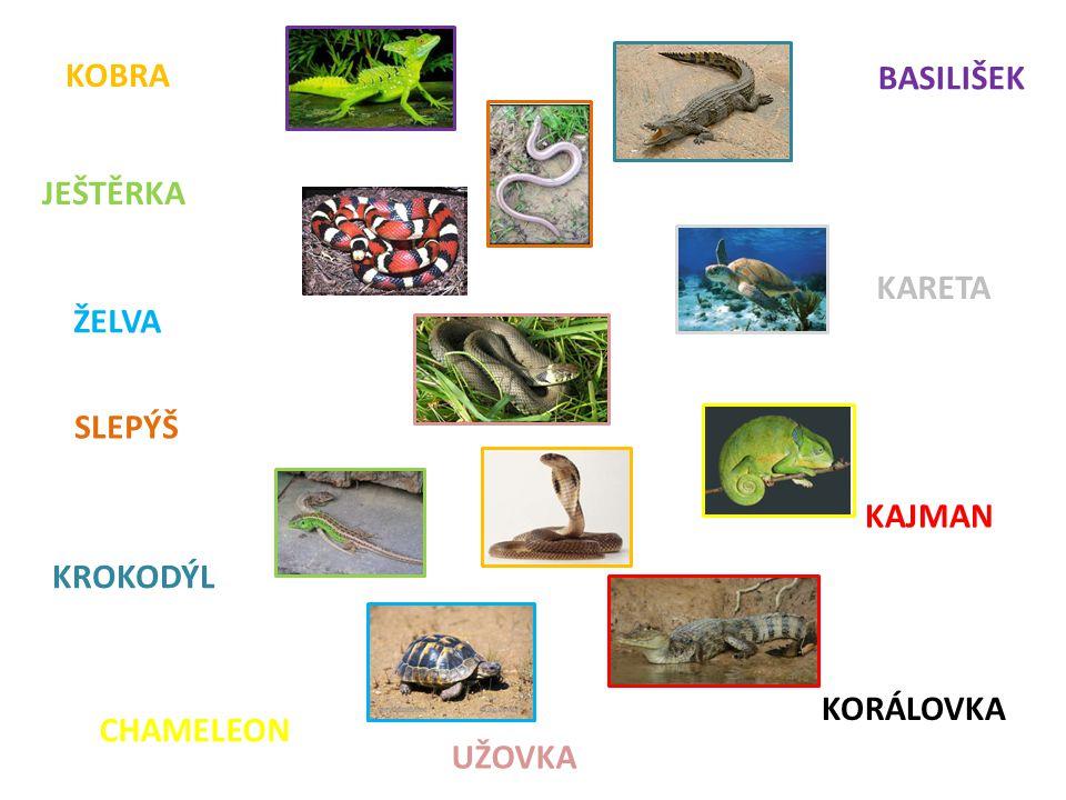 Použitý materiál: Kostra a vnitřní stavba ještěrky Učebnice Přírodopis 8 pro osmý ročník zvláštní školy.
