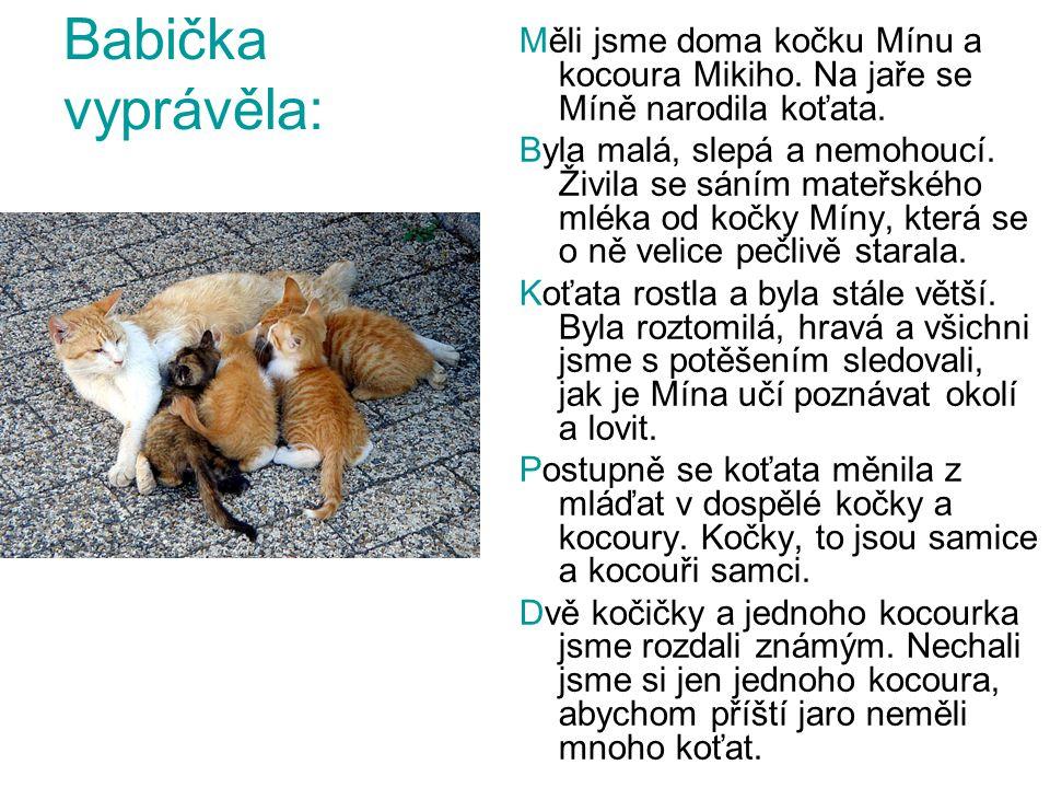 Babička vyprávěla: Měli jsme doma kočku Mínu a kocoura Mikiho. Na jaře se Míně narodila koťata. Byla malá, slepá a nemohoucí. Živila se sáním mateřské