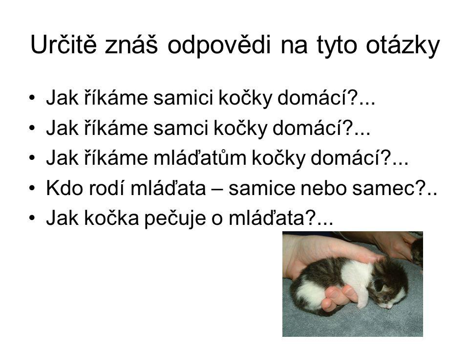 Určitě znáš odpovědi na tyto otázky Jak říkáme samici kočky domácí?... Jak říkáme samci kočky domácí?... Jak říkáme mláďatům kočky domácí?... Kdo rodí