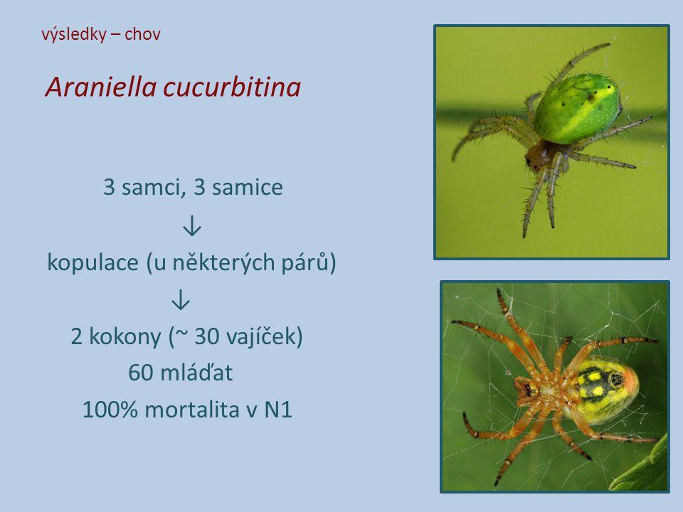 výsledky – chov Araniella cucurbitina 3 samci, 3 samice ↓ kopulace (u některých párů) ↓ 2 kokony (~ 30 vajíček) 60 mláďat 100% mortalita v N1