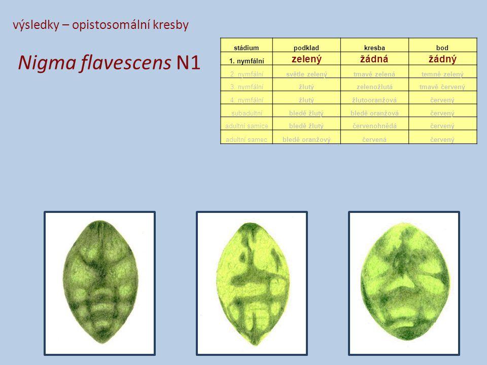 výsledky – opistosomální kresby Nigma flavescens N1 stádiumpodkladkresbabod 1.