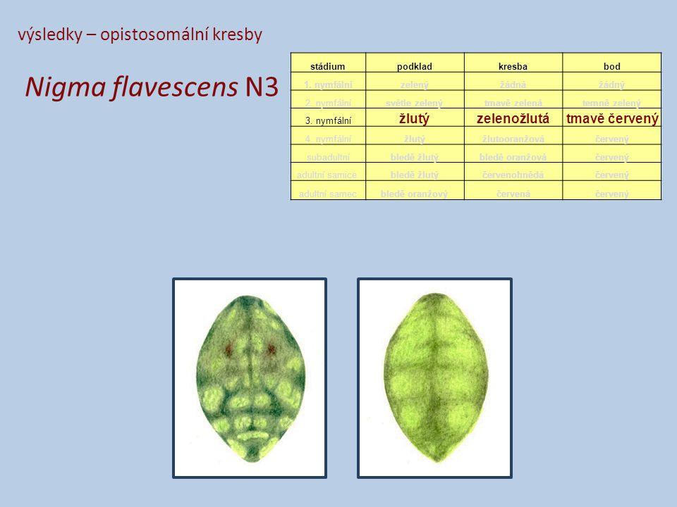 výsledky – opistosomální kresby Nigma flavescens N3 stádiumpodkladkresbabod 1.