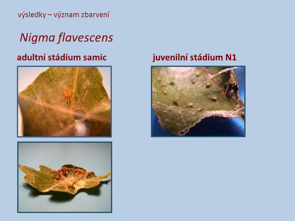 výsledky – význam zbarvení Nigma flavescens adultní stádium samicjuvenilní stádium N1