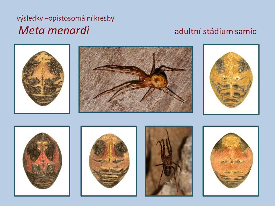 výsledky –opistosomální kresby Meta menardi adultní stádium samic