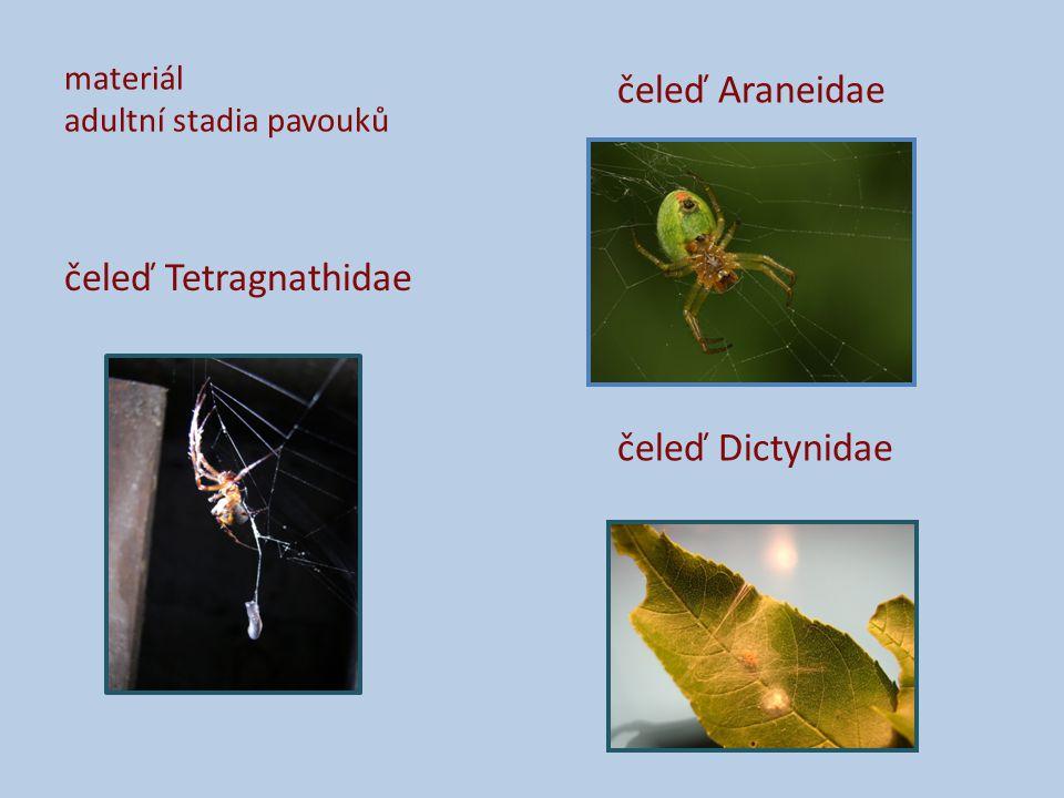 materiál adultní stadia pavouků čeleď Tetragnathidae čeleď Araneidae čeleď Dictynidae