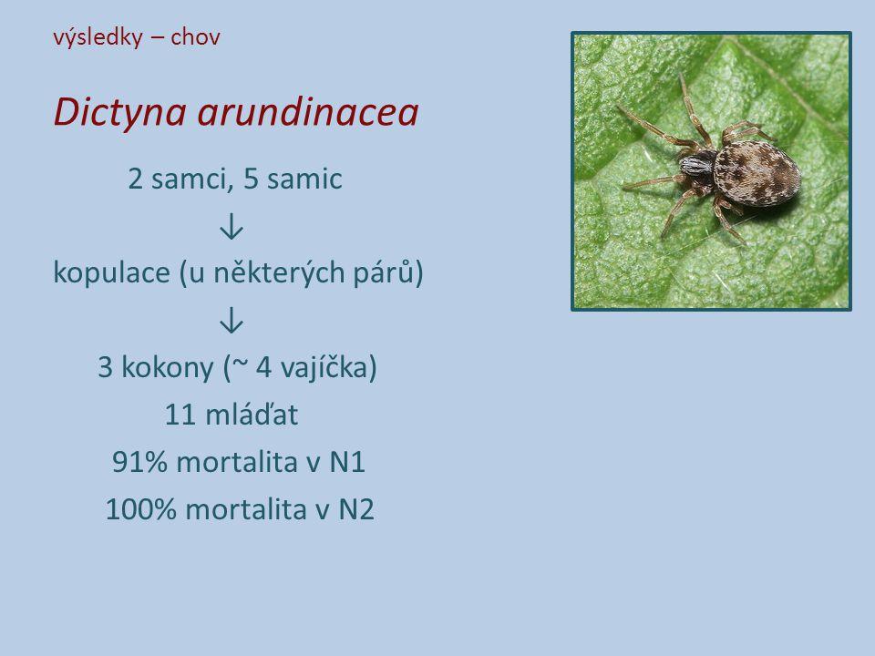 výsledky – chov Dictyna arundinacea 2 samci, 5 samic ↓ kopulace (u některých párů) ↓ 3 kokony (~ 4 vajíčka) 11 mláďat 91% mortalita v N1 100% mortalita v N2