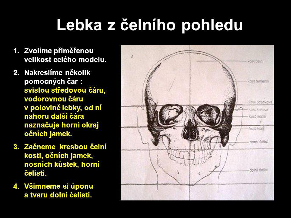 Lebka z profilu Všimněte si dvou základních zjednodušených tvarů, z kterých je složena lebka z bočního pohledu.
