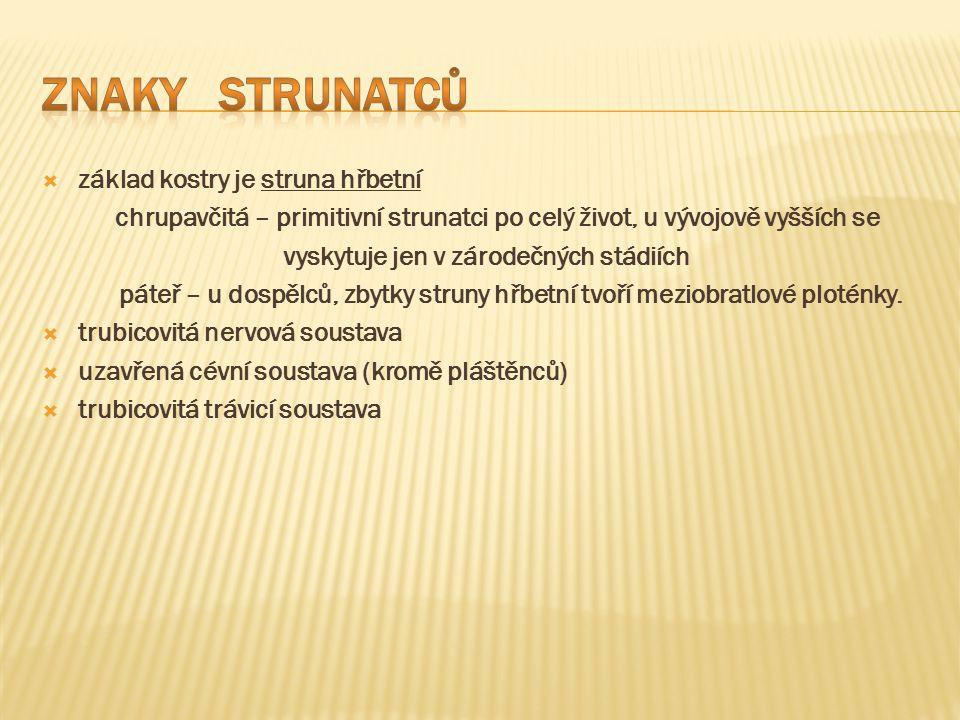  http://jirkarybak.blog.cz/1007/sumky-salpy-vrsenky http://jirkarybak.blog.cz/1007/sumky-salpy-vrsenky  http://jitcinyzvirata.blog.cz/en/0904/animace-ryb http://jitcinyzvirata.blog.cz/en/0904/animace-ryb  http://liska-a-myska.blog.cz/0911/ruzne-animace-zvirat-28 http://liska-a-myska.blog.cz/0911/ruzne-animace-zvirat-28  http://cs.wikipedia.org/wiki/Pl%C3%A1%C5%A1t%C4%9Bnci http://cs.wikipedia.org/wiki/Pl%C3%A1%C5%A1t%C4%9Bnci  http://www.biolib.cz/cz/image/id12014/ http://www.biolib.cz/cz/image/id12014/  http://rockymountainpony.blog.cz/1006/animace-psu http://rockymountainpony.blog.cz/1006/animace-psu  http://zvirata-29.maxportal.cz/inzerce/hadi-plazi-zelvy-465 http://zvirata-29.maxportal.cz/inzerce/hadi-plazi-zelvy-465  http://bio-nature.blog.cz/1004/obojzivelnici-strucne http://bio-nature.blog.cz/1004/obojzivelnici-strucne  Učebnice Přírodopisu pro 7.