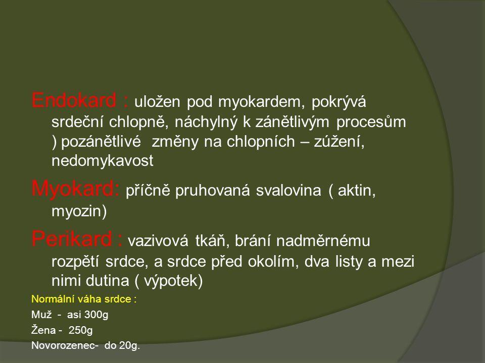 Endokard : uložen pod myokardem, pokrývá srdeční chlopně, náchylný k zánětlivým procesům ) pozánětlivé změny na chlopních – zúžení, nedomykavost Myokard: příčně pruhovaná svalovina ( aktin, myozin) Perikard : vazivová tkáň, brání nadměrnému rozpětí srdce, a srdce před okolím, dva listy a mezi nimi dutina ( výpotek) Normální váha srdce : Muž - asi 300g Žena - 250g Novorozenec- do 20g.