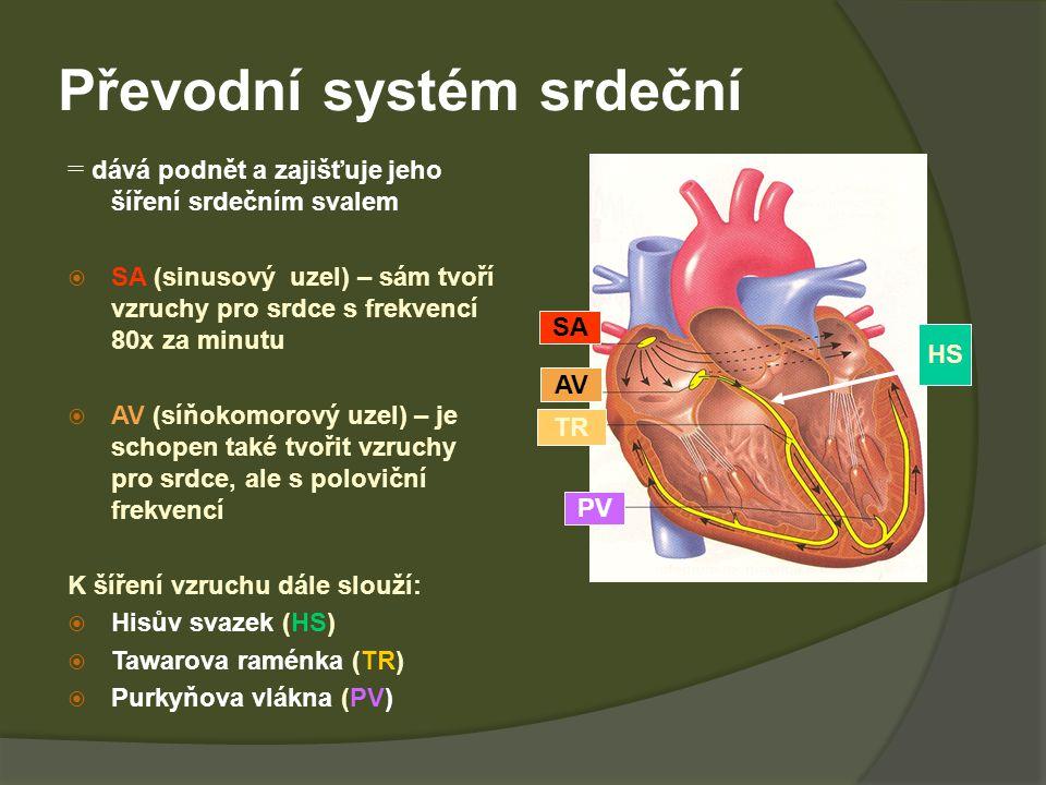 Převodní systém srdeční = dává podnět a zajišťuje jeho šíření srdečním svalem  SA (sinusový uzel) – sám tvoří vzruchy pro srdce s frekvencí 80x za minutu  AV (síňokomorový uzel) – je schopen také tvořit vzruchy pro srdce, ale s poloviční frekvencí K šíření vzruchu dále slouží:  Hisův svazek (HS)  Tawarova raménka (TR)  Purkyňova vlákna (PV) SA AV TR PV HS