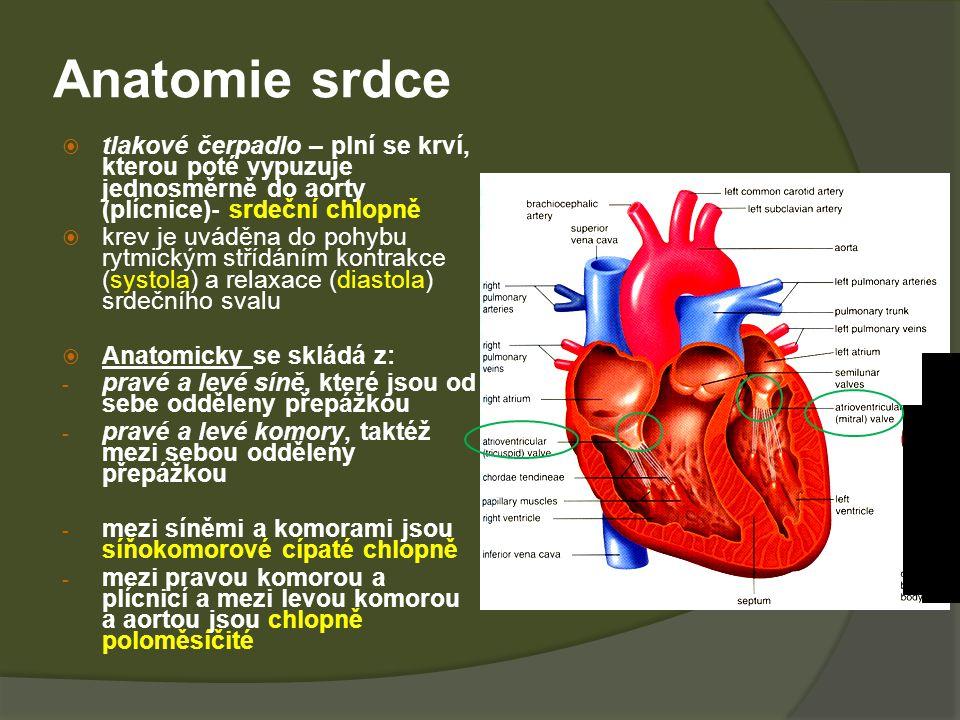 Anatomie srdce  tlakové čerpadlo – plní se krví, kterou poté vypuzuje jednosměrně do aorty (plícnice)- srdeční chlopně  krev je uváděna do pohybu rytmickým střídáním kontrakce (systola) a relaxace (diastola) srdečního svalu  Anatomicky se skládá z: - pravé a levé síně, které jsou od sebe odděleny přepážkou - pravé a levé komory, taktéž mezi sebou odděleny přepážkou - mezi síněmi a komorami jsou síňokomorové cípaté chlopně - mezi pravou komorou a plícnicí a mezi levou komorou a aortou jsou chlopně poloměsíčité