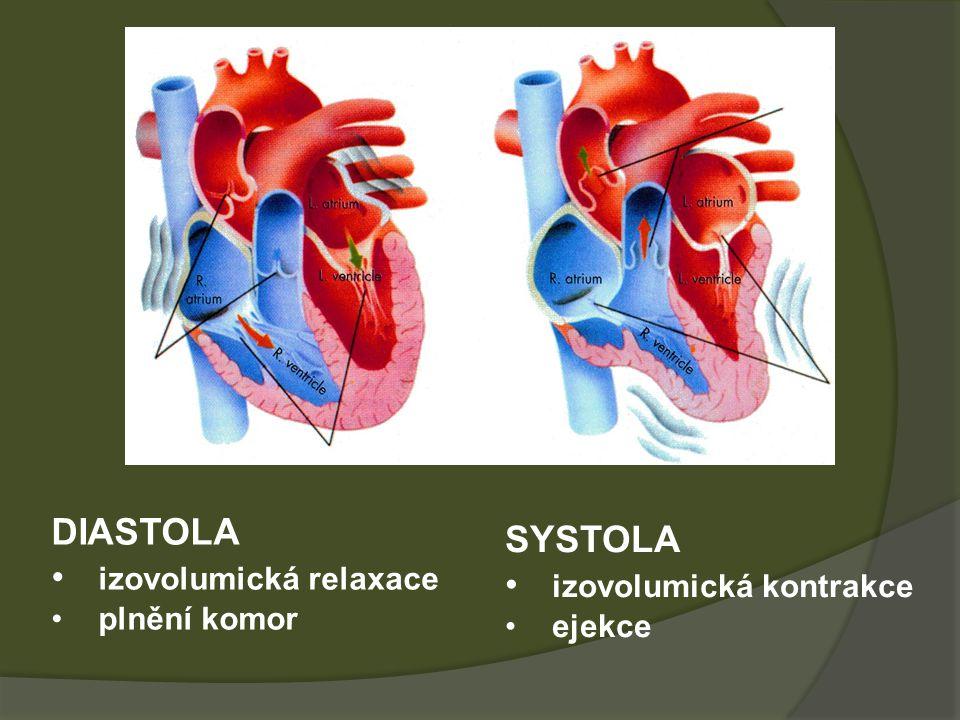 DIASTOLA izovolumická relaxace plnění komor SYSTOLA izovolumická kontrakce ejekce
