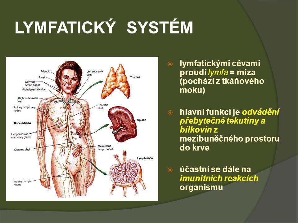 LYMFATICKÝ SYSTÉM  lymfatickými cévami proudí lymfa = míza (pochází z tkáňového moku)  hlavní funkcí je odvádění přebytečné tekutiny a bílkovin z mezibuněčného prostoru do krve  účastní se dále na imunitních reakcích organismu