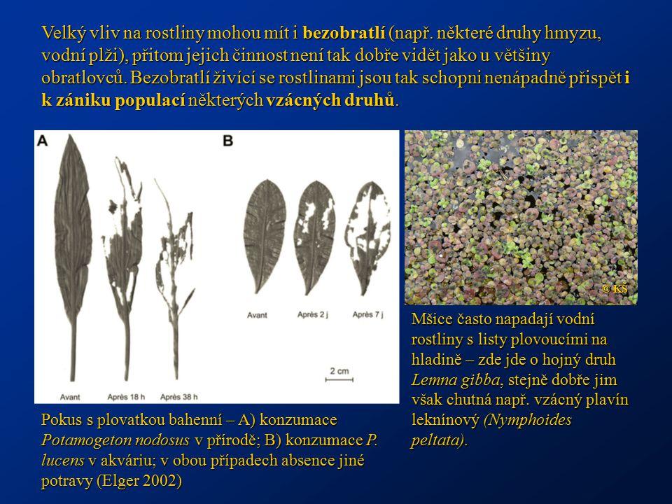 Velký vliv na rostliny mohou mít i bezobratlí (např. některé druhy hmyzu, vodní plži), přitom jejich činnost není tak dobře vidět jako u většiny obrat