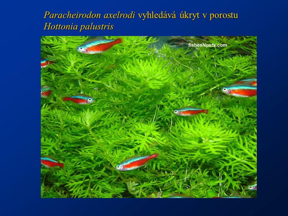 http://www.umwelt.ktn.gv.at/seenbericht99/fischbilder/amurkarpfen_frei.jpg http://www-f.igb-berlin.de/images/bild_17.5.jpg Amur bílý má čelisti a požerákové zuby uzpůsobené k rozmělnění tvrdé rostlinné potravy
