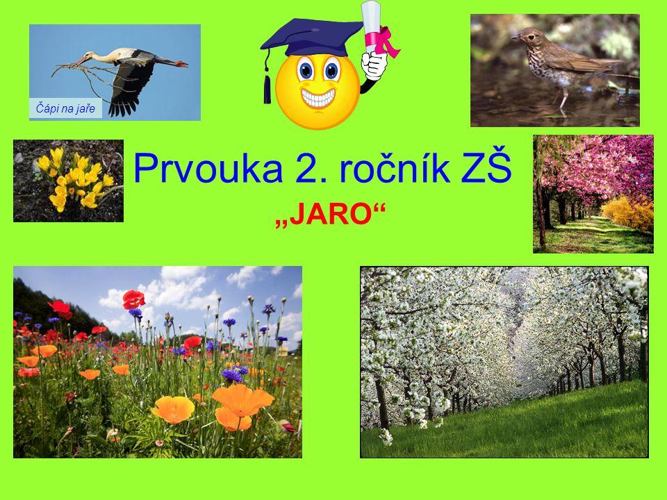 """Prvouka 2. ročník ZŠ """"JARO"""" Čápi na jaře"""