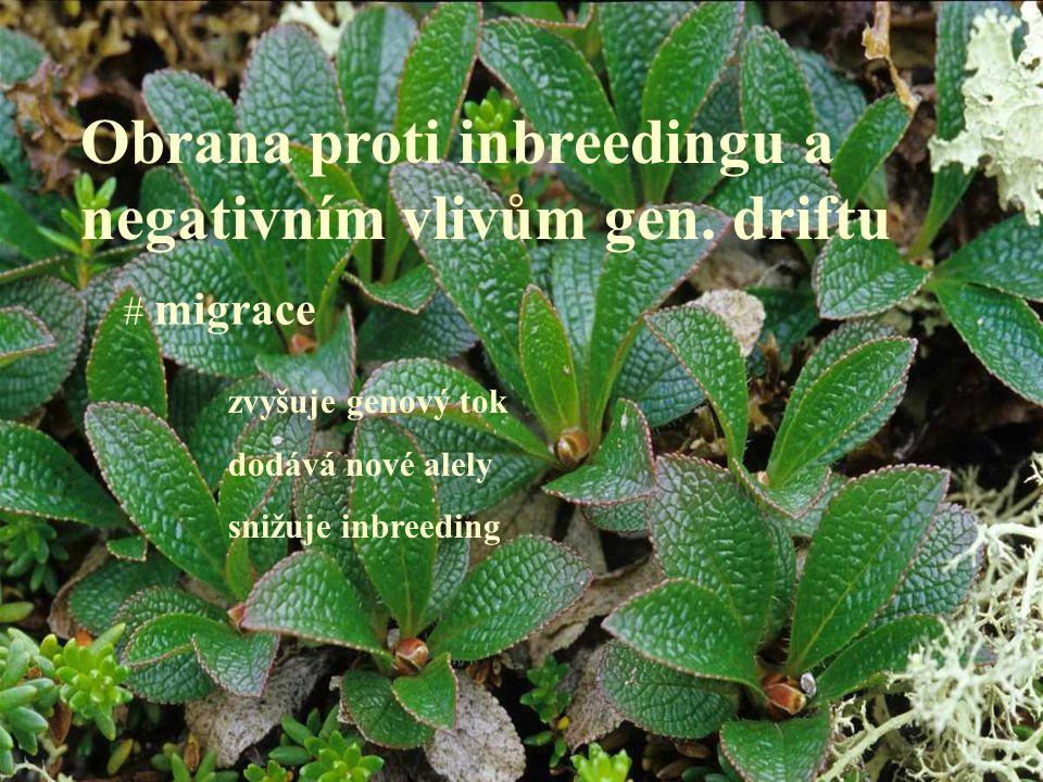 Obrana proti inbreedingu a negativním vlivům gen. driftu # migrace zvyšuje genový tok dodává nové alely snižuje inbreeding