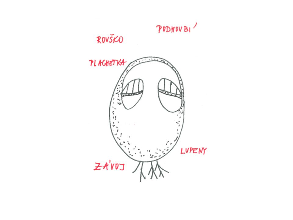 Rozmnožování hub: Houby se rozmnožují výtrusy, které vznikají ve výtrusnících na roušku(rourkaté x lupenité) Výtrusnice → výtrusy → vypadnou na zem→ zde z nich ve vlhku vyklíčí → podhoubí → na podhoubí vyrůstá plodnice s rouškem