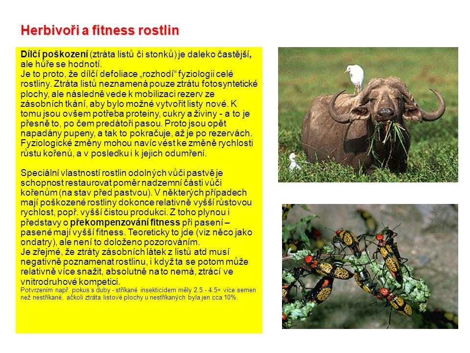 Herbivoři a fitness rostlin Dílčí poškození (ztráta listů či stonků) je daleko častější, ale hůře se hodnotí.