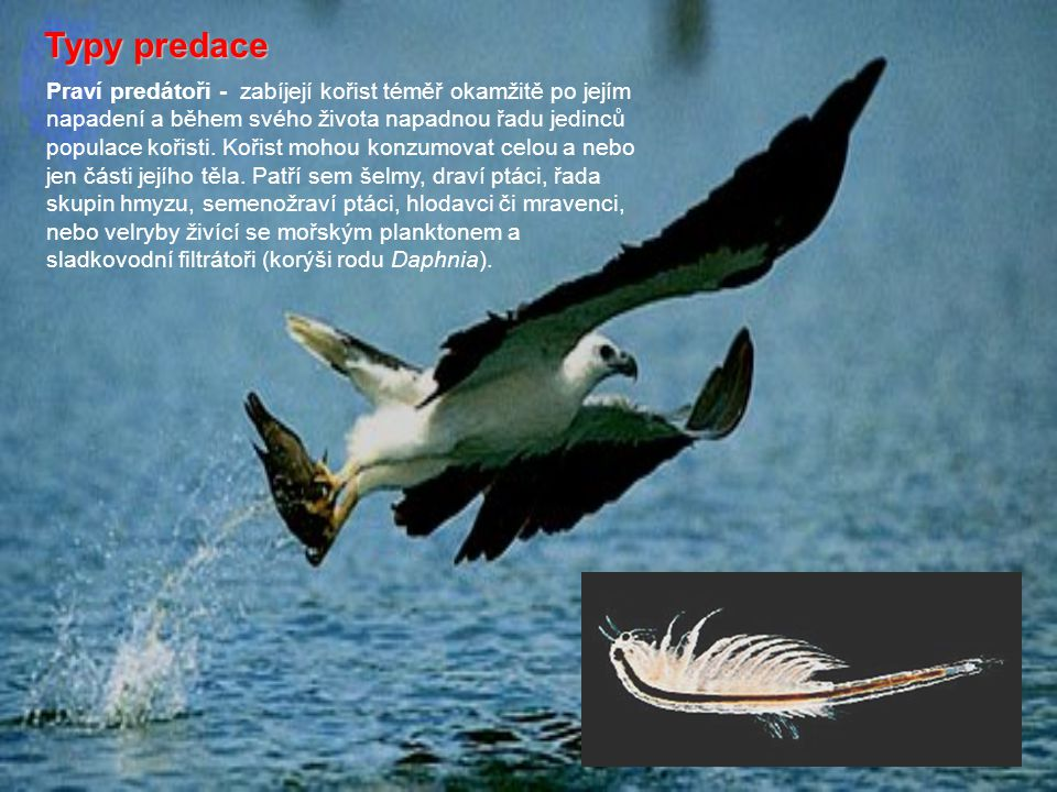 Typy predace Praví predátoři - zabíjejí kořist téměř okamžitě po jejím napadení a během svého života napadnou řadu jedinců populace kořisti. Kořist mo