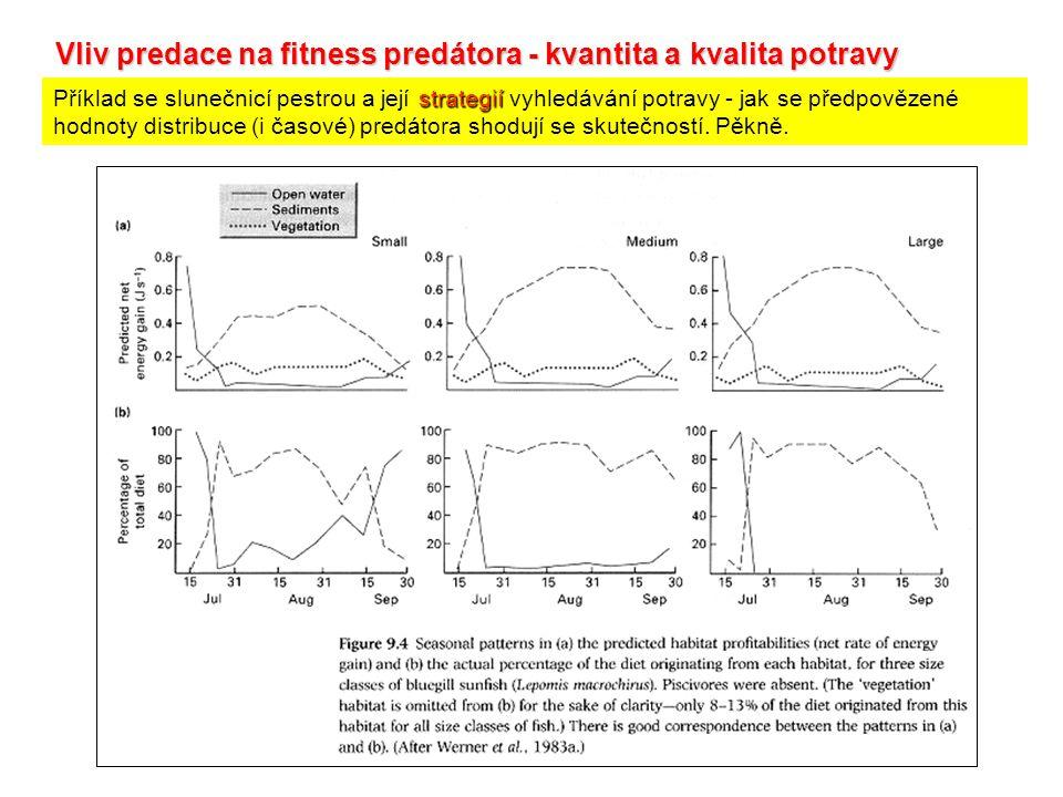 Vliv predace na fitness predátora - kvantita a kvalita potravy strategií Příklad se slunečnicí pestrou a její strategií vyhledávání potravy - jak se předpovězené hodnoty distribuce (i časové) predátora shodují se skutečností.