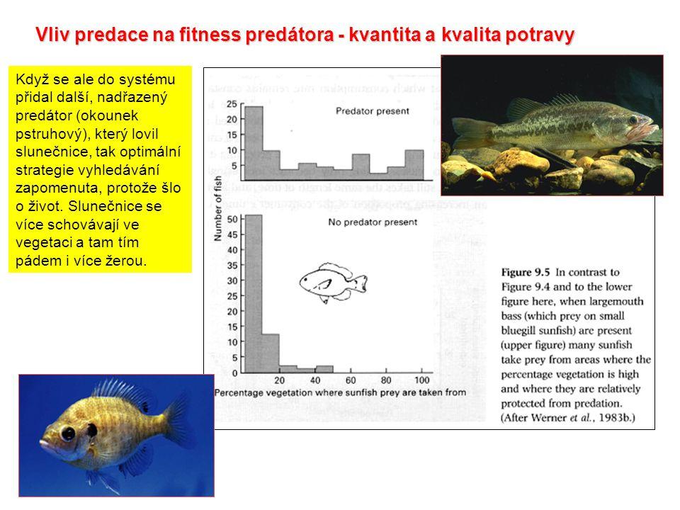 Vliv predace na fitness predátora - kvantita a kvalita potravy Když se ale do systému přidal další, nadřazený predátor (okounek pstruhový), který lovi