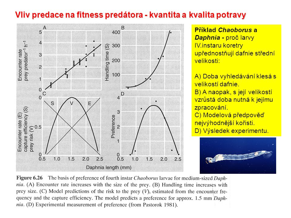 Vliv predace na fitness predátora - kvantita a kvalita potravy Příklad Chaoborus a Daphnia - proč larvy IV.instaru koretry upřednostňují dafnie středn