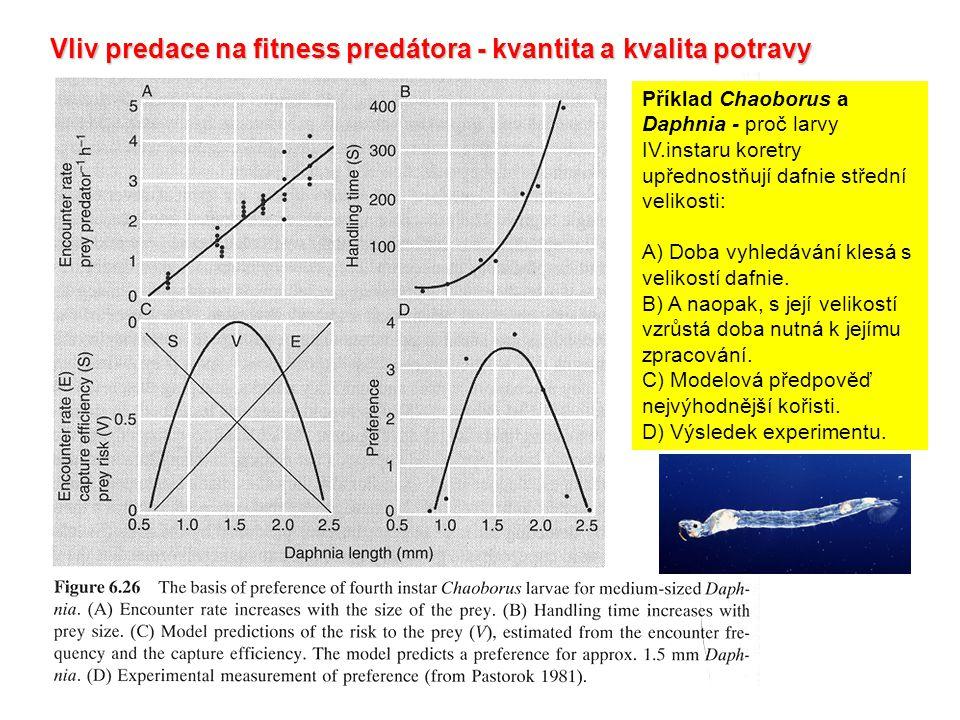 Vliv predace na fitness predátora - kvantita a kvalita potravy Příklad Chaoborus a Daphnia - proč larvy IV.instaru koretry upřednostňují dafnie střední velikosti: A) Doba vyhledávání klesá s velikostí dafnie.