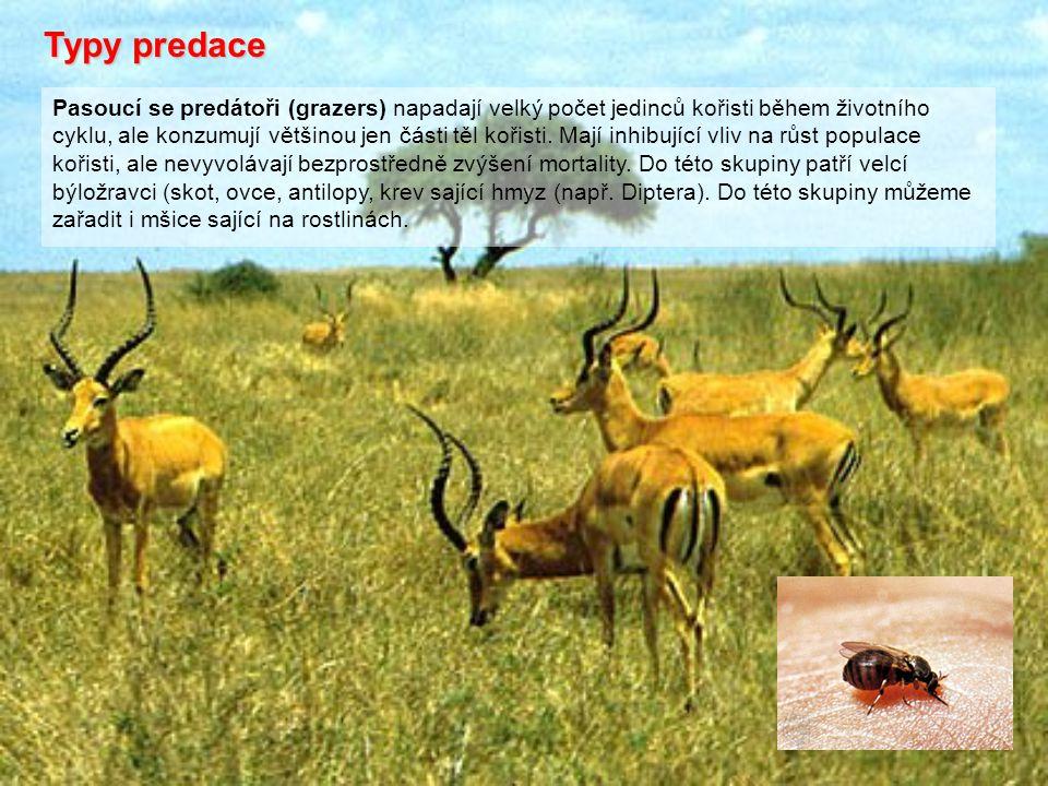 Typy predace Pasoucí se predátoři (grazers) napadají velký počet jedinců kořisti během životního cyklu, ale konzumují většinou jen části těl kořisti.